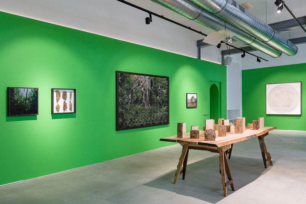 Ausstellungsansicht. Andreas Greiner - Jungle Memory