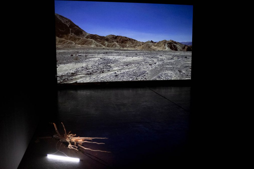 We/re Nature, Installation view. Courtesy of the artist