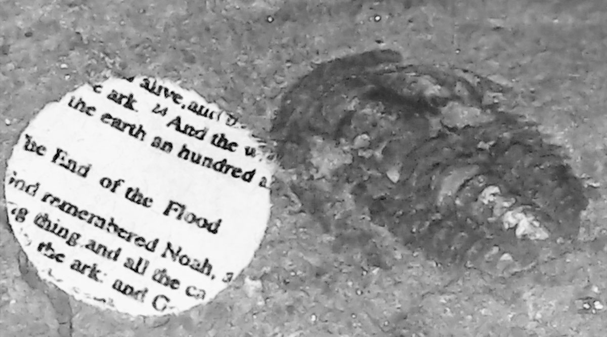 The end of the Flood, 2020, Video still from digital microscope, trilobite fossil, 4 x 7 mm, 500 million years old, miniaturized Genesis fragment, 5 mm